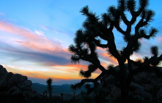 Dawn in Joshua Tree