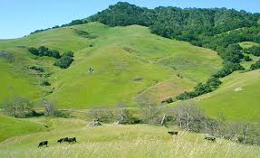 Green hills in San Luis Obispo
